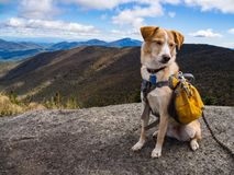 Adventure Dog with Yellow Backpack on Mountain Summit royalty free stock photography