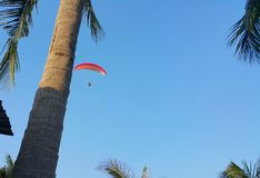 Adventure on flying parameter in blue sky over coconut field Stock Photography