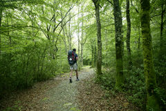 Adventure Hiking On Beech Forest Of Pyrenees Royalty Free Stock Images