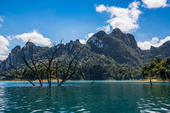 Adventure at Khao Sok, National Park, dead tree Postal.  Royalty Free Stock Images