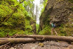 Adventure man hiking with backpack, walking in Oneonta Gorge, outdoor lifestyle.  Stock Photography