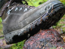 Adventure, Outdoor. Hiking boot in a mountain forest Royalty Free Stock Images