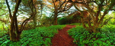 Adventure Path Through The Wilderness. During the day. Photograph was shot at Chetco Point Park, Brookings, Oregon, United States Stock Photos