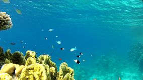 Adventure in ropical sea. Underwater life tropical fish. Red sea. The corals and fish. Transparent and warm water. Underwater life tropical fish stock video