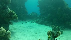 Adventure under water. Tropical sea. Red sea Underwater life fish on the bottom. The corals and the caves. Corals. Fish and clear water. Tropical sea stock footage