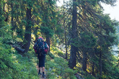 Adventurer goes with big backpack through dense green forest Royalty Free Stock Photos
