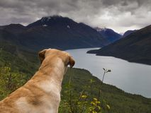 Adventures with Man`s Best Friend royalty free stock images
