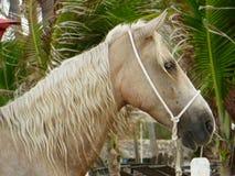 Adventurous horse Stock Image