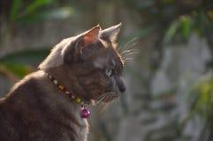 Advertencia de la mirada del gato de Brown Fotografía de archivo libre de regalías