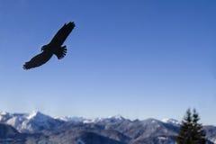 Advertencia del vuelo del pájaro para el vidrio Foto de archivo libre de regalías