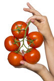 Advertisement branch with tomatoes Royalty Free Stock Photo
