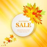 Advertising discount banner with fallen leaves. Autumn sale hand drawn. Vector illustration Royalty Free Stock Images