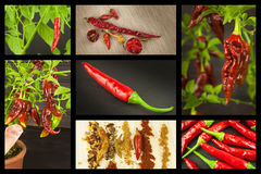 Advertising of spicy food. New Collage of hot peppers. Advertising chili sale. Different kinds of chili. Royalty Free Stock Photo