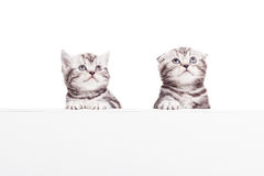 Advertising your pet product. Royalty Free Stock Photography