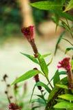 Adveture de junge de fleur sauvage Photos libres de droits