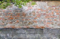 Advierta la pared de ladrillo y los leafes Foto de archivo libre de regalías