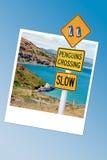 Advierta la señal de tráfico en Nueva Zelanda, marco de los pingüinos de la foto del instanat Fotos de archivo