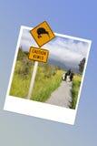 Advierta la señal de tráfico en Nueva Zelanda, marco inmediato del kiwi de la foto Fotos de archivo libres de regalías