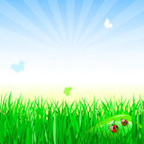Adybug op gras stock illustratie