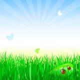 Adybug sur l'herbe illustration stock