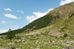 Adyr-su valley. In Kabardino-Balkaria (Russia), mountain landscape in summer sunny day Stock Photography
