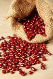 Adzuki beans Royalty Free Stock Photos