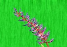 Aechmea-dichlamydea Stockfotografie