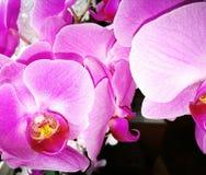 Aechmea flower. Royalty Free Stock Photo