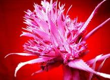 Aechmeabloem Artistiek kijk in uitstekende levendige kleuren Stock Fotografie