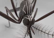 Aedes Aegypti. 3d render of Aedes Aegypti Royalty Free Stock Photo