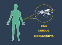 Aedes Aegypti mosquitoes logo vector icon. Dengue Zika Chikungunya Royalty Free Stock Photo