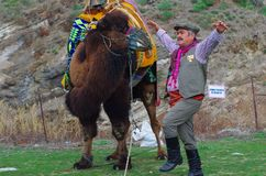 Aegean Folk dancer man performing next to a camel. Selcuk, Izmir / Turkey - JANUARY 19 / 2014 : Aegean Folk dancer man with traditional clothes performing next royalty free stock image