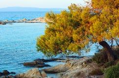 Sunset Aegean sea coast Chalkidiki, Greece. Aegean sea coast landscape with pine tree, sunset view from Karidi beach Chalkidiki, Greece Stock Images