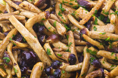 aegerita agrocybe gotować pieczarki Obraz Stock