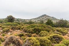 Aegina krajobraz, Grecja obrazy stock