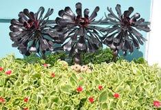 Aeonium arboreum ` Zwartkop-` und Doreanthus Mezoo Stockbild