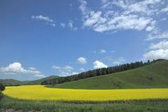 Aer Hulunbeier prairie canola flower Stock Photos