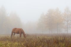 Aer morning fog Forest Park horse Royalty Free Stock Image