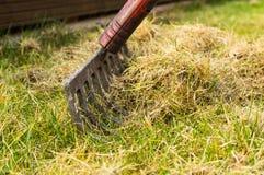 Aerating och göra ren upp gräset med en kratta i trädgården arkivbilder