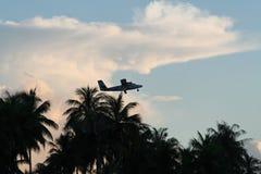 Aereo al decollo sopra le palme fotografie stock