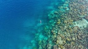 Aereo: donna che si immerge sul mare caraibico tropicale della barriera corallina archivi video