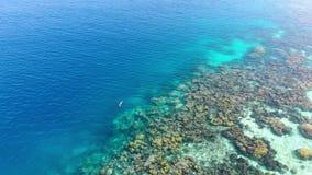 Aereo: donna che si immerge sul mare caraibico tropicale della barriera corallina video d archivio