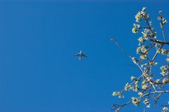 Aereo nel cielo blu ed in un ramo fotografia stock libera da diritti