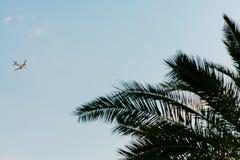 Aereo nel cielo Shooted dalla terra Sorvolare la palma Immagini Stock Libere da Diritti