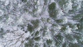aereo Scivolamento del colpo sopraelevato del fuco degli alberi bianchi glassati nell'inverno freddo Fondo della cartolina d'augu archivi video