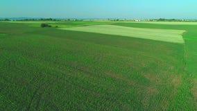Aereo sorvolando il campo delle piante verdi e di decollo dell'aereo 4K stock footage
