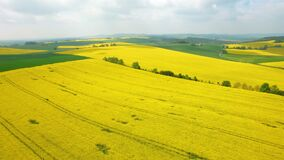 Aerial above blooming yellow rapeseed field. Aerial view with background of blue sky and clouds. Italy. Tuscany stock footage
