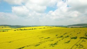 Aerial flight over blooming yellow rapeseed field. Aerial view with background of blue sky and clouds. Italy, Tuscany. Aerial flight over blooming yellow stock footage
