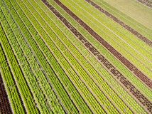 Aerial agricultural view of lettuce production field and greenho Stock Photos