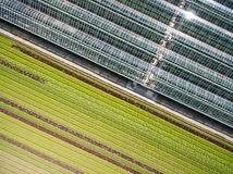 Aerial agricultural view of lettuce production field and greenho Stock Photo